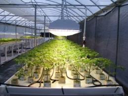 Seedlings under High Bay Flourescent Fixtures