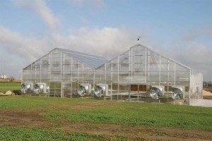 The 80' x 50' greenhouse at our Dyersville, IA campus.
