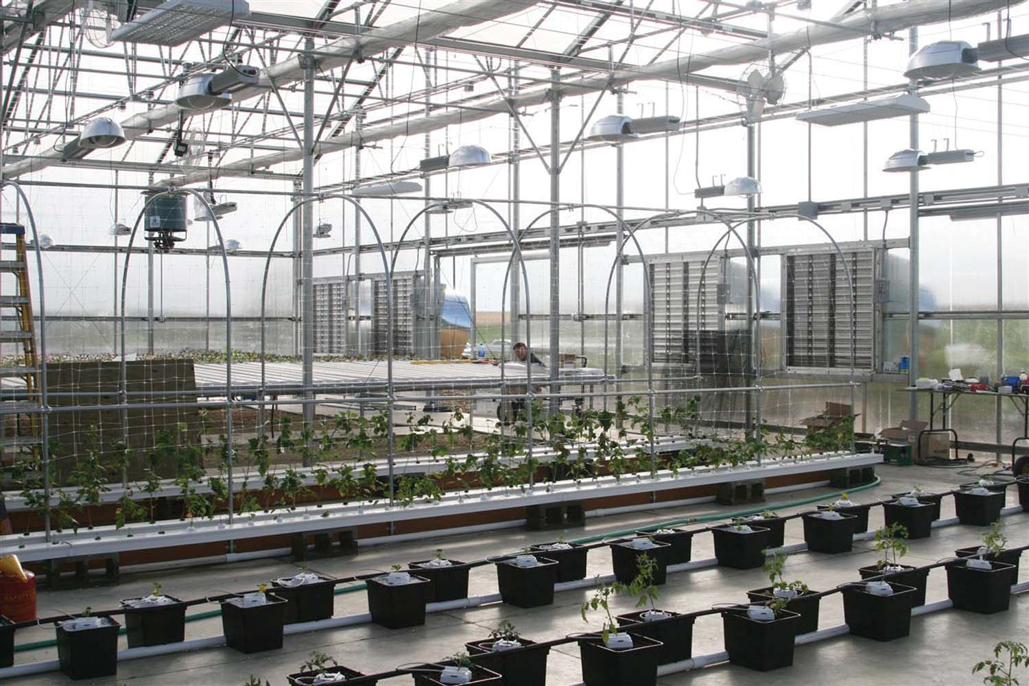 Hydroponic range in greenhouse at Dyersville, IA campus.
