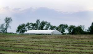 Solar Star Gothic Style Greenhouse