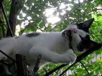 Cat pruning tree