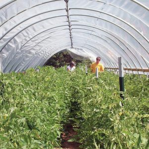 High Tunnels & Cold Frames