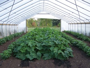 Dan Mielke's High Tunnels