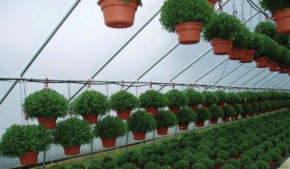 Mid Atlantic Growers 1