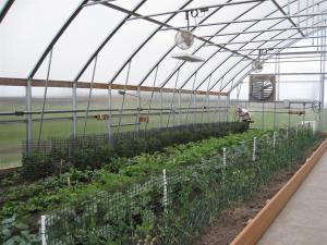 High tunnel demonstration area in the Dyersville, IA greenhouse.