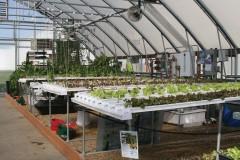 Technology Center hydroponics setup
