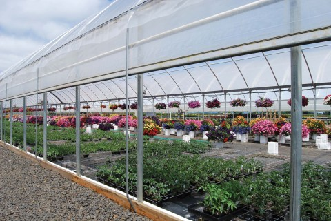 Greenhouse with Roll-Up Sides