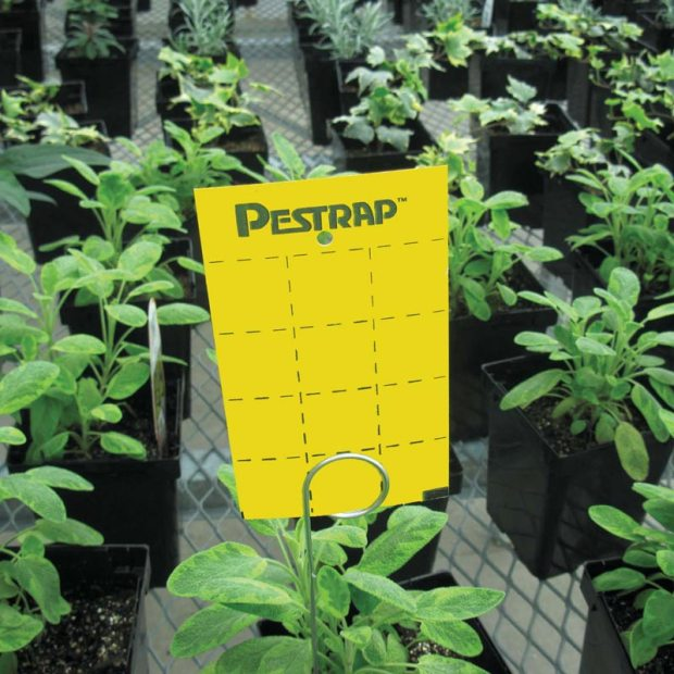 Pestrap™ Insect Traps