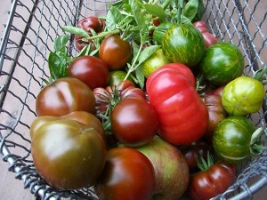 A variety of heirloom tomatoes