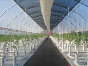 Greenhouse Drip Irrigation System