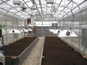 Greenhouse light fixtures above raised beds