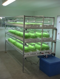 Microgreens in Growers Supply NFT channels