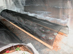 Low tunnels insulated with TekFoil