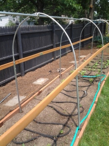 Hoop house irrigation