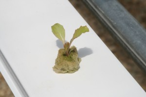 Seedling in NFT channel