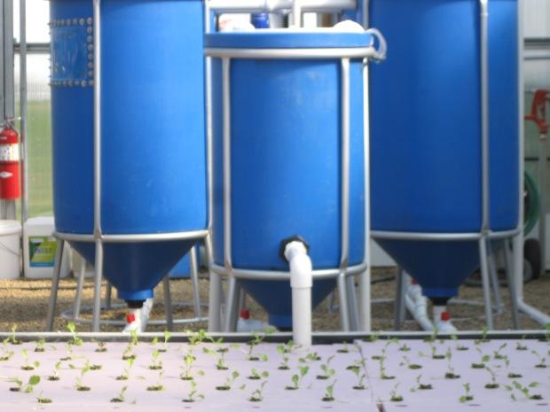 GS Aquaponics system