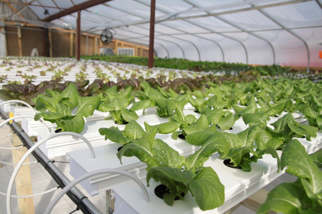 Soilless agriculture growers supply for Soil less farming