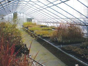 Inside Dove Creek Greenhouse