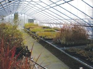 Inside Dove Creek Greenhouse