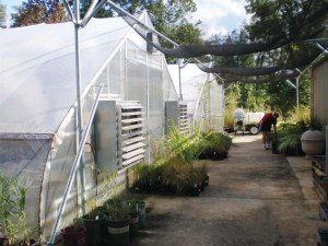 Dove Creek Greenhouses