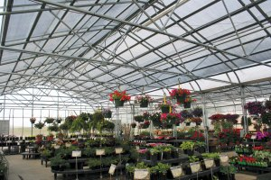 Inside Majestic Greenhouse