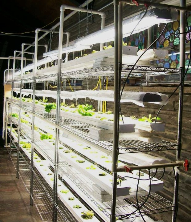 John Bosco hydroponics