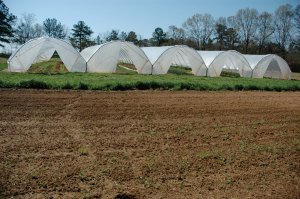 ClearSpan Add-A-Bay High Tunnels