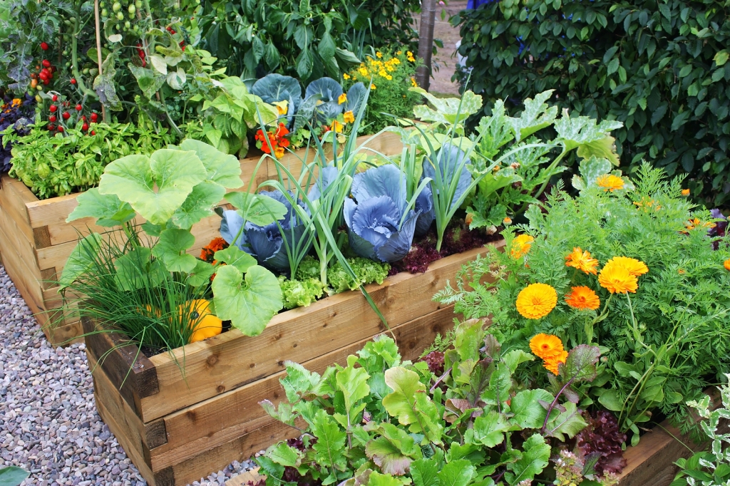 Flourishing Vegetable Garden