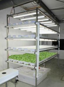 Vertical Lettuce & Herb System