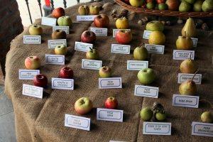 Fresh Fruit Variety