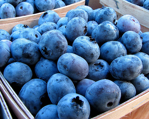 Beautiful blueberries
