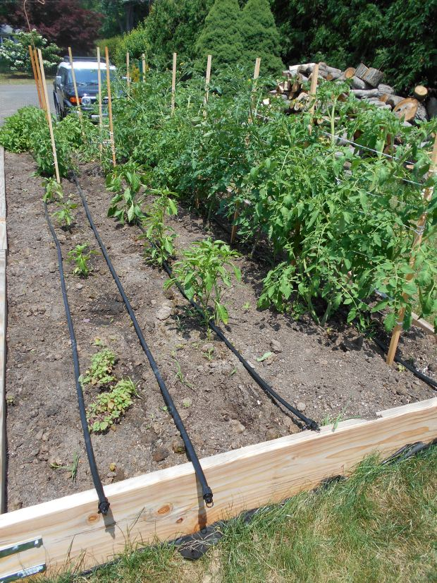 Drip irrigation fully installed