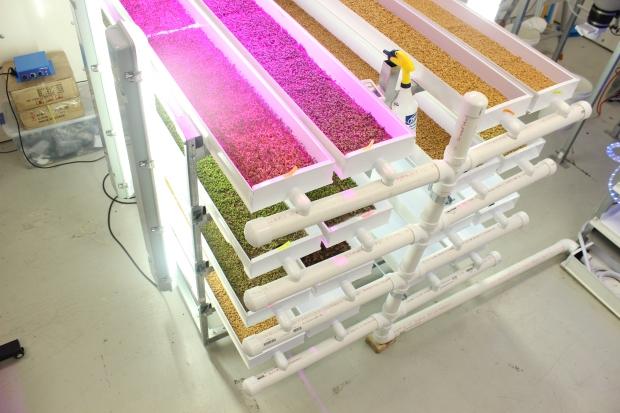 Growers Supply Microgreens