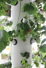 Vertical aeroponic system close up