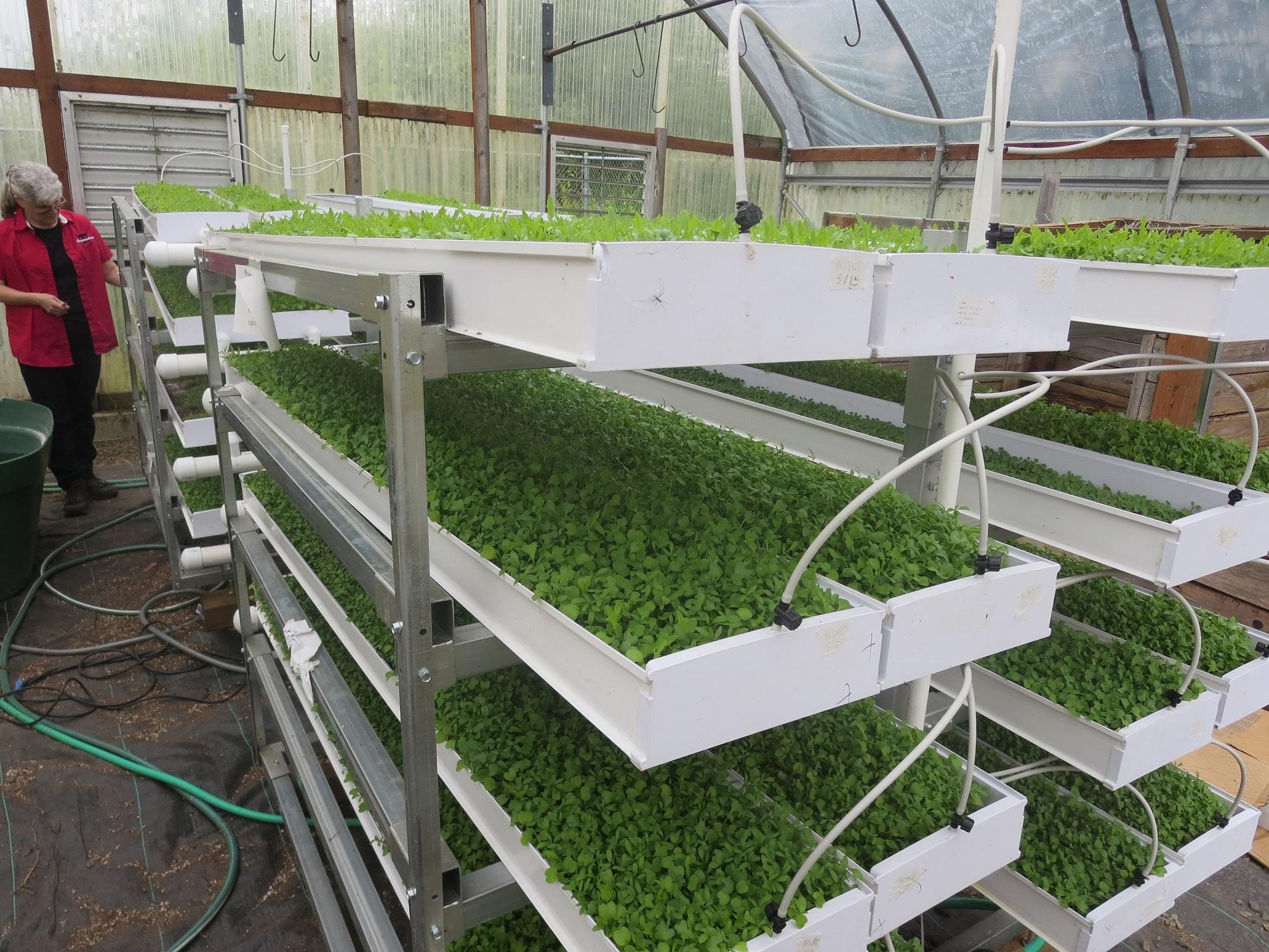 Producing Microgreens at Tillamook High School | Growers ...