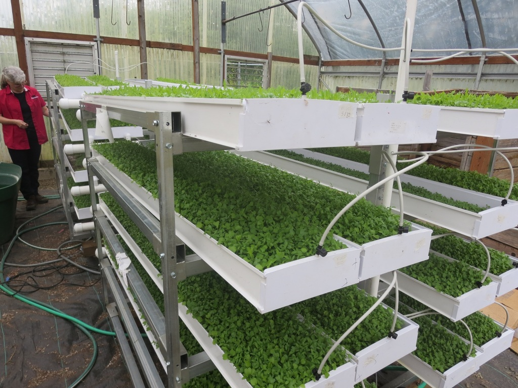 Tillamook High School Microgreens