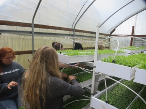 Harvesting at Tillamook High School
