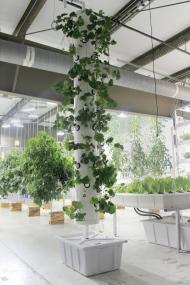 Grow-Tek Vertical Micro Aeroponic System