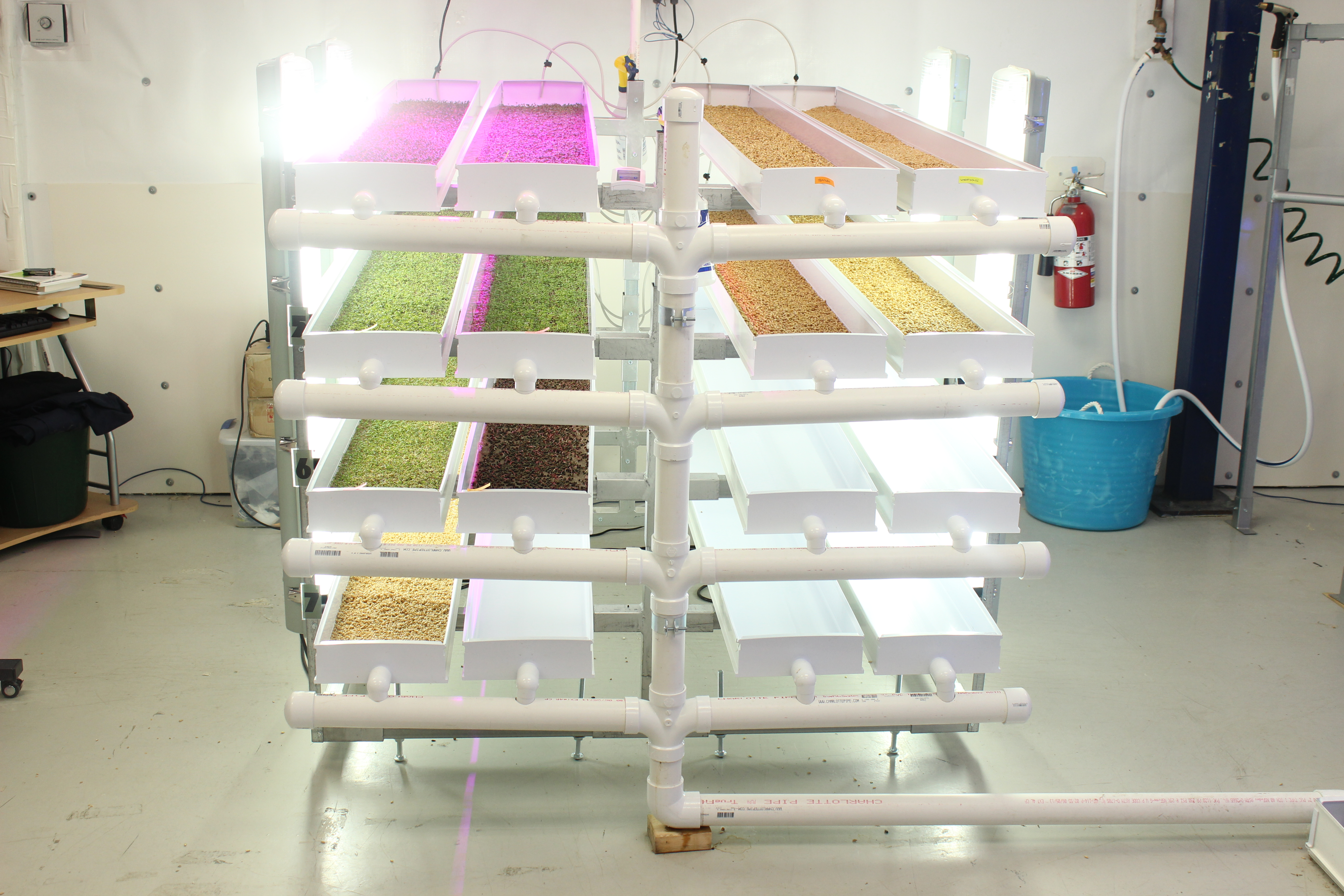 Untangling The Secrets Of Microgreen Production Part I