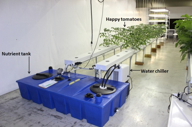 Hydroponics water chiller