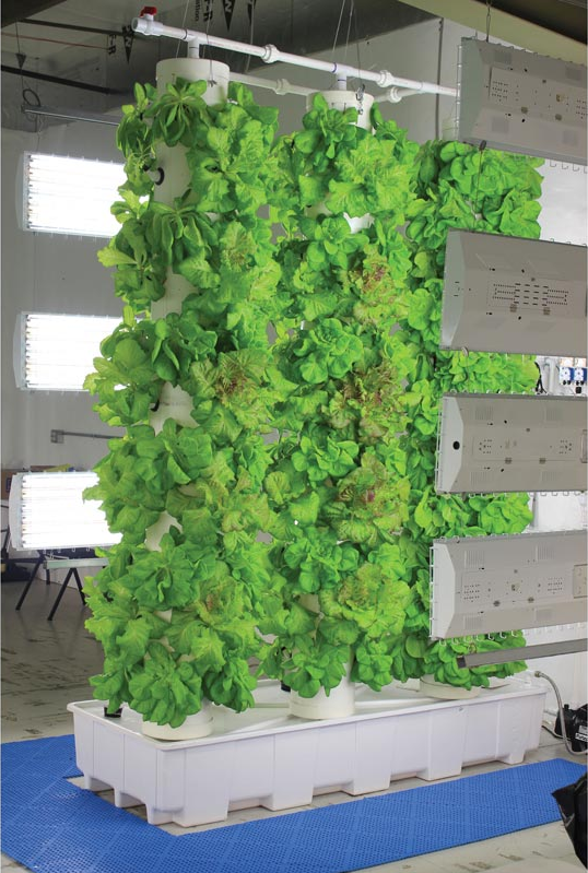 Lettuce in Vertical Aeroponic Hobby System