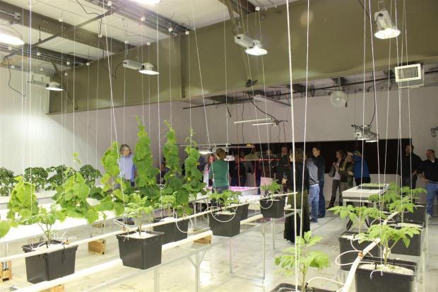 Fruiting Plant Grow Room