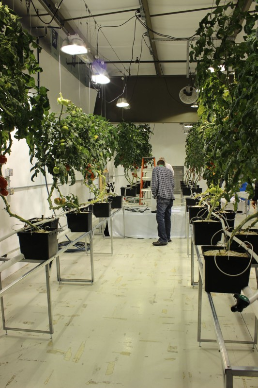 Grow Room 2 - Fruiting Crops