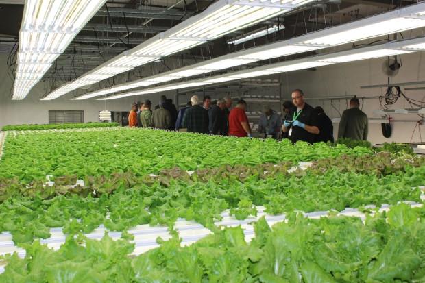 Lettuce Channels