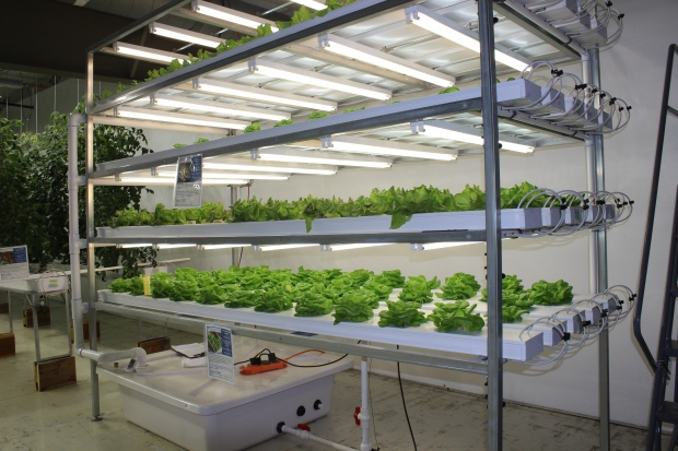 Vertical Lettuce and Herb System