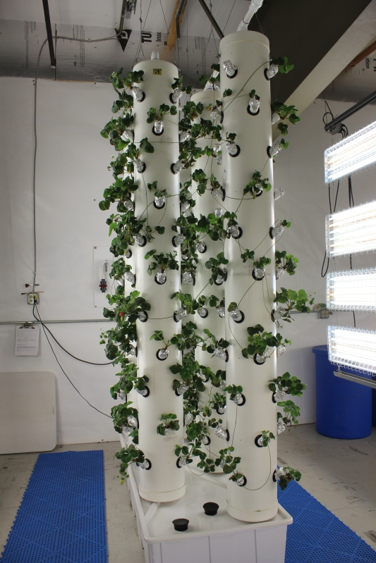 Vertical Aeroponic Hobby System