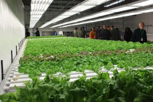 Hydroponic Lettuce Grow Room