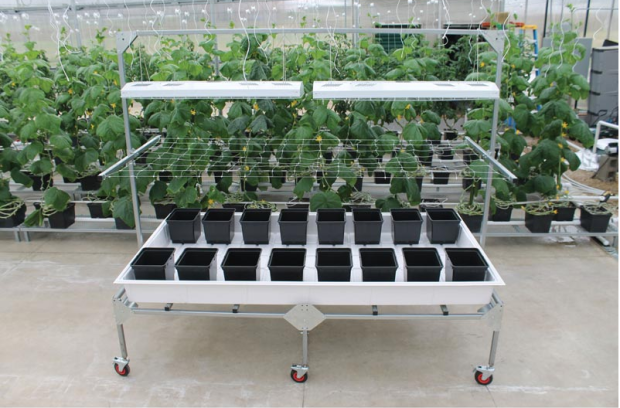 Rolling Tray With Propagation Bench