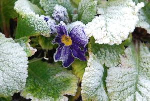 Flower in winter