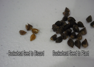 Good and Bad Seed